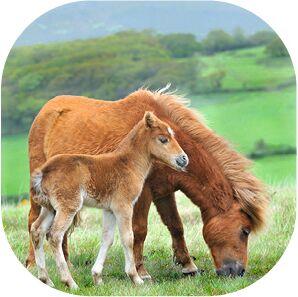 Kleine Diashow Pferde