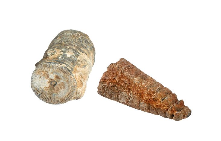 Expedition Natur Mini-Ausgrabungsset Außergewöhnliche Fossilien