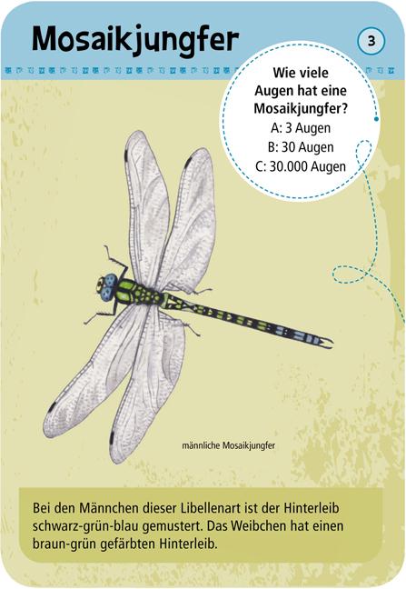 Expedition Natur - 50 heimische Insekten & Spinnen