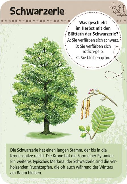 Expedition Natur - 50 heimische Bäume